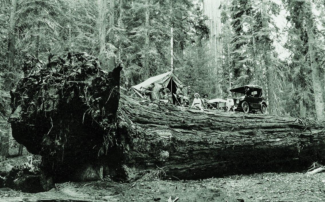 sequoia 1917 RvOjilx.jpg